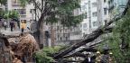 Green Shoots Bring Hope To Hong Kong Life