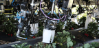 Robots Are Trying To Pick Strawberries. So Far, They're Not Very Good At It