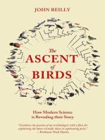 ASCENT BIRDS