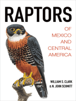 Raptors of Mexico and Central America