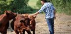 Regenerative Farming Trailblazers