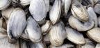 The Shellfish Gene