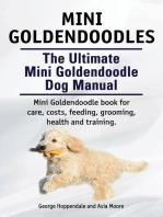 Mini Goldendoodle. Miniature Goldendoodle Owners manual.