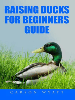 Raising Ducks for Beginner's Guide