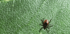 Lyme Disease Is On The Rise Again. Here's How To Prevent It