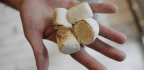 What the Marshmallow Test Really Teaches About Self-Control