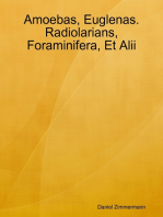 Amoebas, Euglenas. Radiolarians, Foraminifera, Et Alii