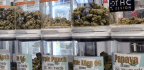 Oncologists Often Suggest Medical Marijuana, But Know Little About It, Survey Finds