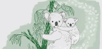 How To Handle A Koala-chlamydia Epidemic