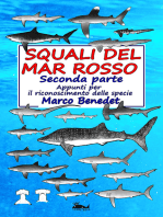 Squali del Mar Rosso