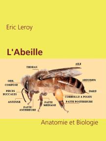 L'Abeille: Anatomie et Biologie