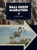 Dall Sheep Migration
