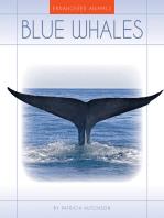 Blue Whales