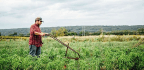 Small Farmers Are Mixing Old Equipment With New Tech