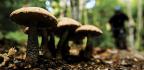 Acadian Driftwood