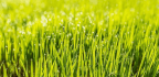 How To Create A Perfectly Imperfect Lawn