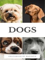 Dogs Photobook