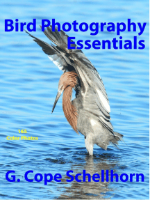 Bird Photography Essentials