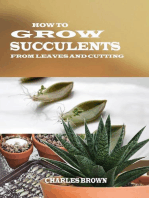 How to Grow Succulents From Leaves and Cuttings