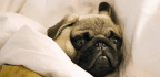 Psychologists Are Trying To Figure Out Why We Don't Go To Sleep (even When We Want To)