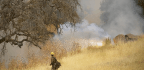 Northern California Fire Was Sparked By Faulty Electric Fence