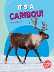 It's a Caribou!