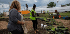 Urban Farmers Forced Off Land Find New Ground To Grow