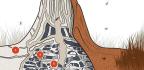 Termites Are Nature's Most Amazing Skyscraper Engineers