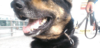 Colombian Drug Traffickers Put A $70,000 Bounty On A Police Dog