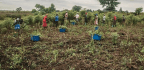 No 354 A SUPERFOOD GROWS PROSPERITY IN AFRICA