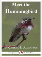 Meet the Hummingbird