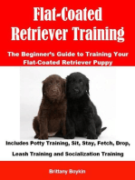 Flat-Coated Retriever Training