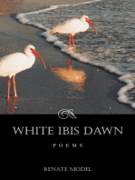 White Ibis Dawn