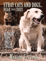 Stray Cats and Dogs…Hear Their Cries