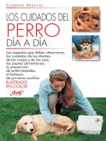 Los cuidados del perro día a día