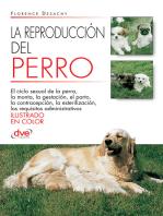 La reproducción del Perro