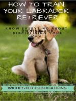 How to Train Your Labrador Retriever