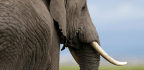 The Three Major Cartels Behind the Downfall of Africa's Elephants
