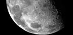 SpaceX's Moon Trip Is the Ultimate Artist Residency
