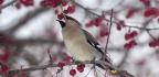 Minnesota Residents Call Police On Rowdy Drunk Birds