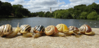Cities Are Turning Snails Yellow