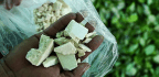 Colombia Is Growing Record Amounts Of Coca, The Key Ingredient In Cocaine