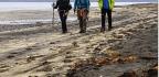 Wired Icelanders Seek To Keep Remote Peninsula Digital-free