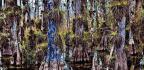 Escape To The Everglades