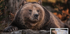 Six Ways To Shoot… Zoo Photography