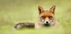 Wild Wonder Capture Animal Relaxation