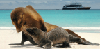 Our Top 25 Cruise Experiences