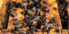 Time To Bee-friendly
