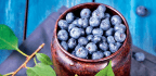Brain Berries