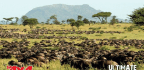 Serengeti Migration Expedition